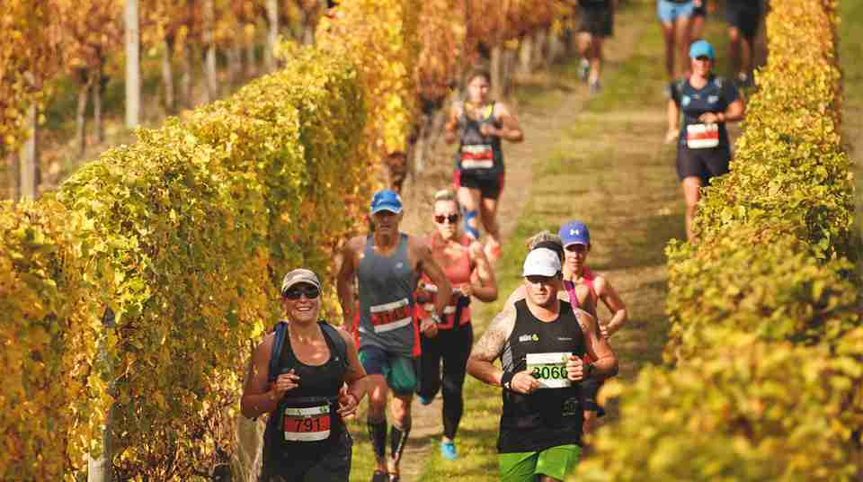 marlborough events vineyard half marathon